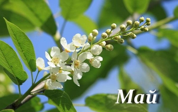 Весна май фото и картинки красивые 002