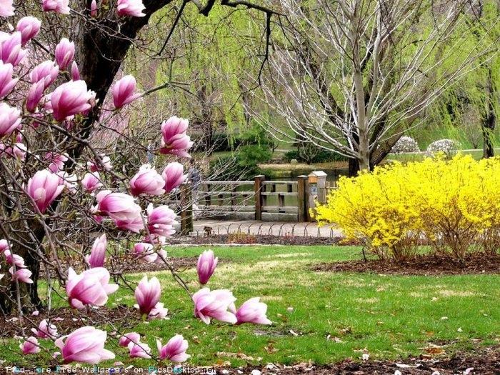 Весна май фото и картинки красивые 004