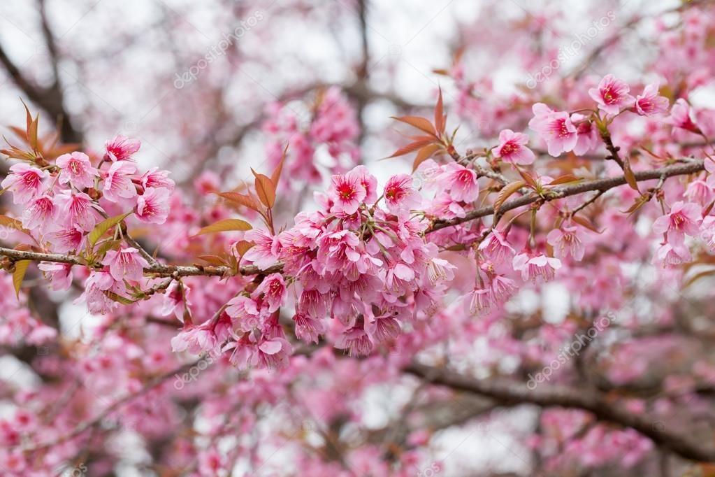 Весна май фото и картинки красивые 005