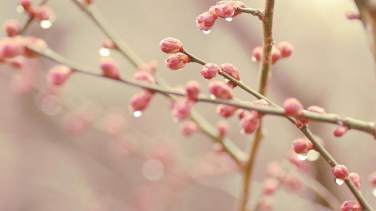 Весна май фото и картинки красивые 007