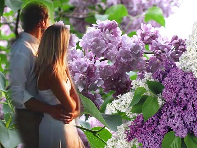 Весна май фото и картинки красивые 008