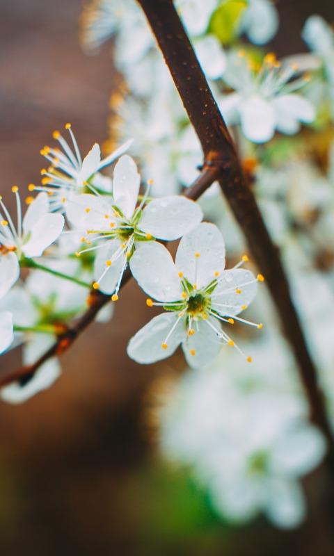 Весна май фото и картинки красивые 010