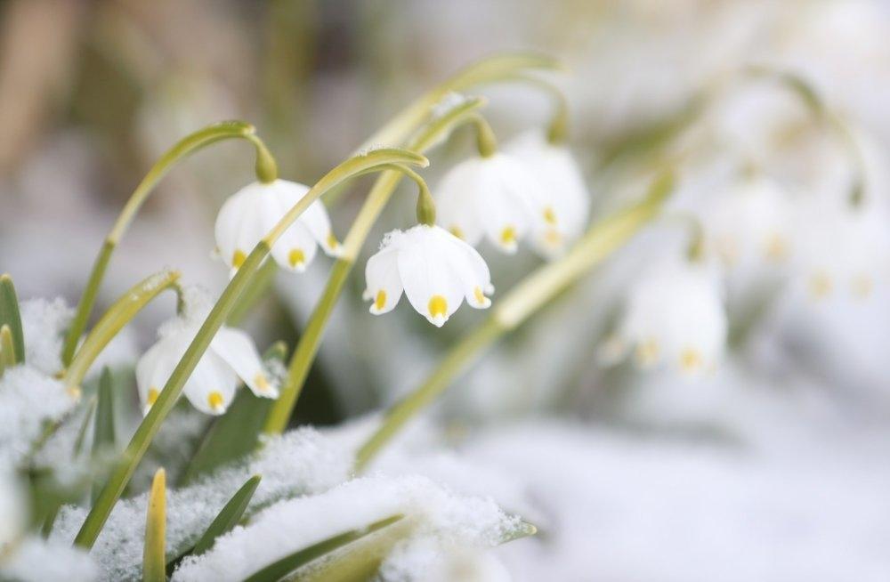 Весна май фото и картинки красивые 011