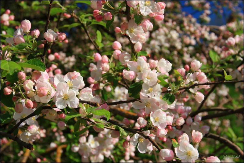 Весна май фото и картинки красивые 012