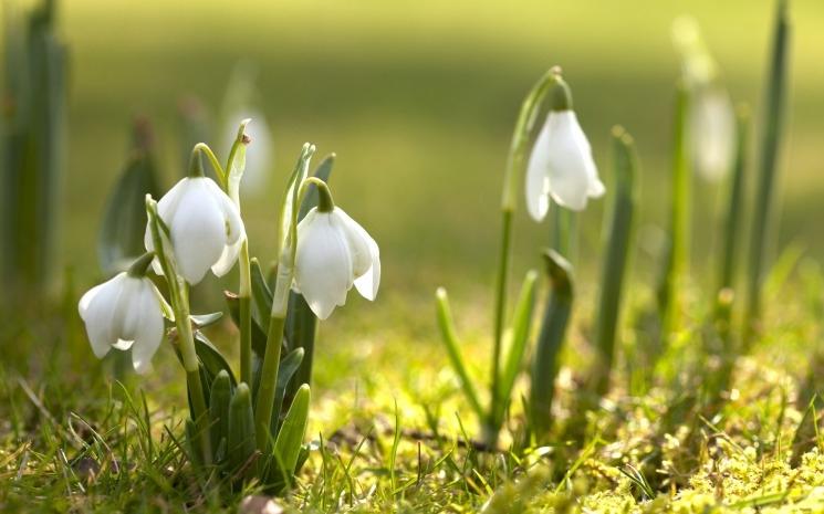 Весна май фото и картинки красивые 014