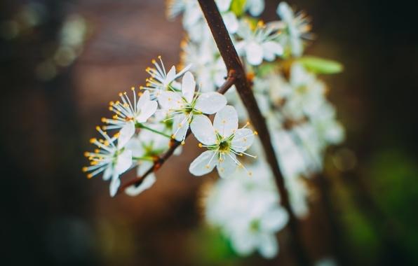 Весна май фото и картинки красивые 015