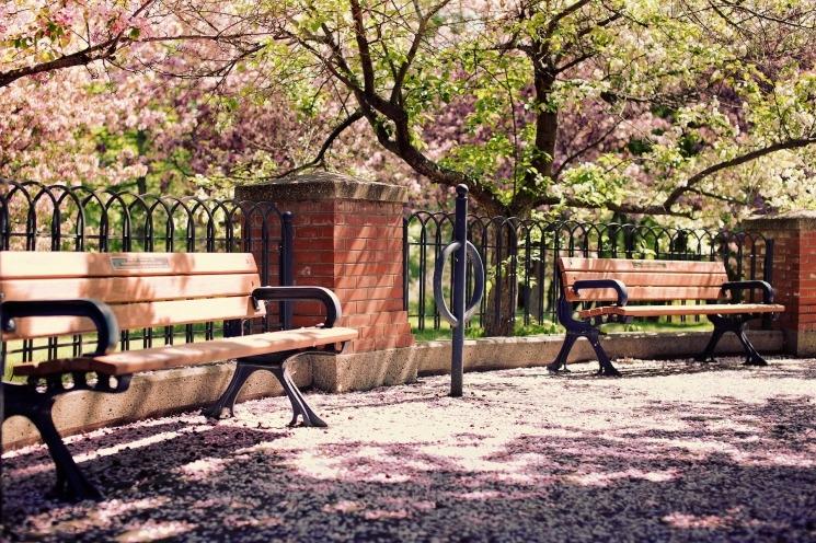Весна май фото и картинки красивые 016