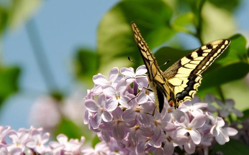Весна май фото и картинки красивые 017