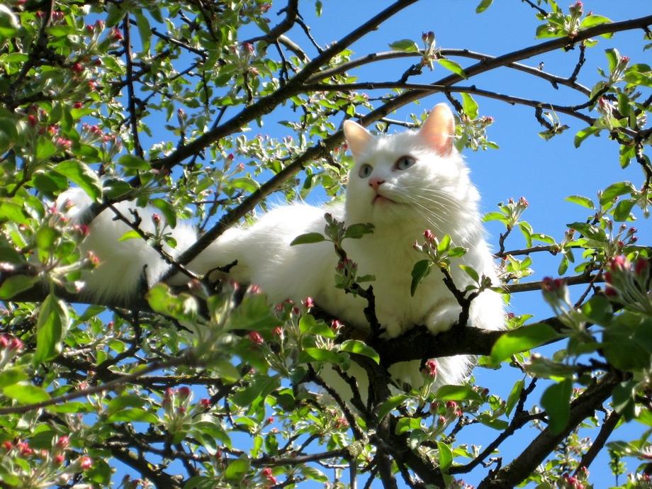 Весна май фото и картинки красивые 018