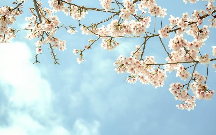 Весна май фото и картинки красивые 019