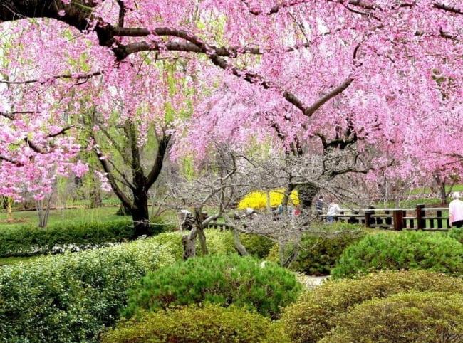 Весна май фото и картинки красивые 020