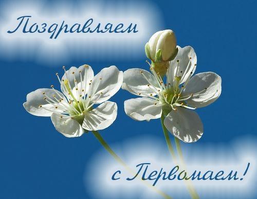 Весна май фото и картинки красивые 021