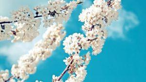 Весна май фото и картинки красивые 023