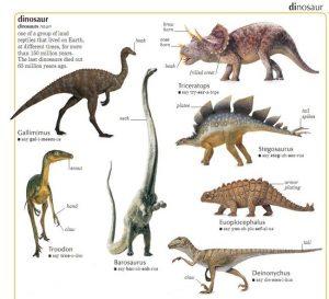Виды динозавров с фото   подборка 028