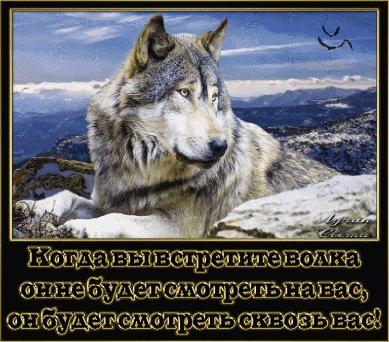 Открыток, волки картинки с собаками с надписями