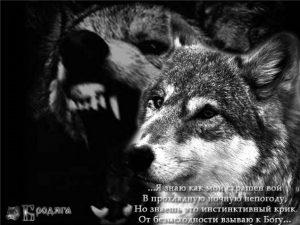 Волки с надписями фото и картинки 026