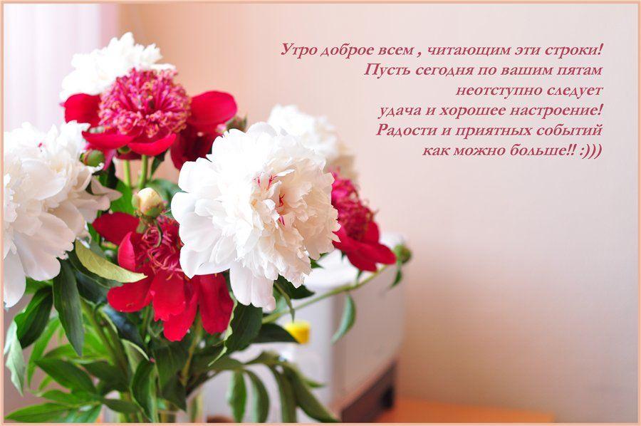 Красивые картинки с цветами с пожеланиями хорошего, картинки винни-пух