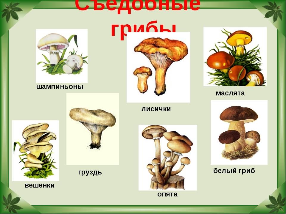 Картинки съедобные грибы с названиями