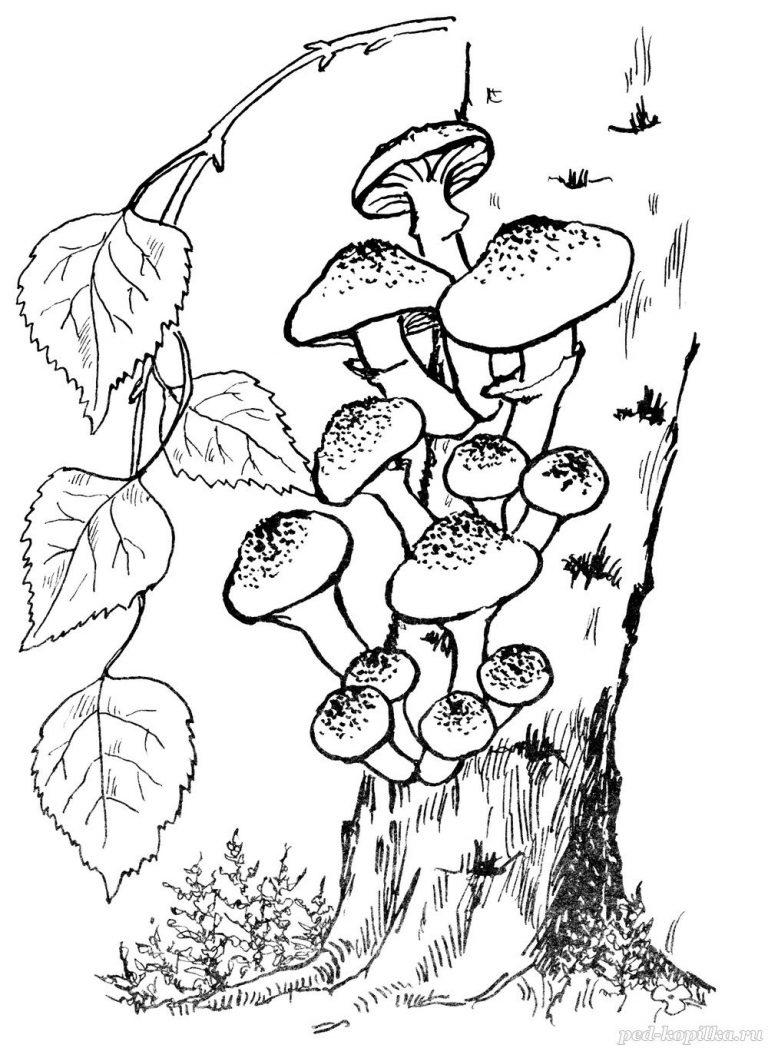 Картинки карандашом грибы и ягоды