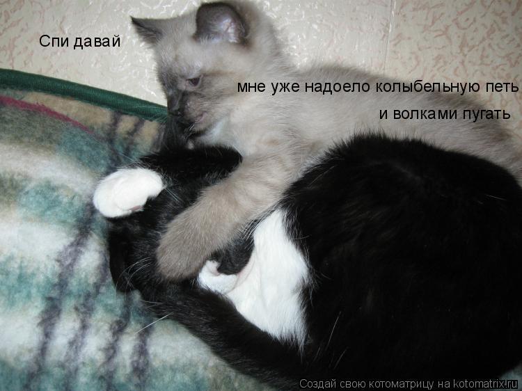 Спать идешь моя дорогая картинка