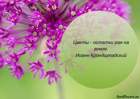 Дарите женщинам цветы картинки и открытки 009