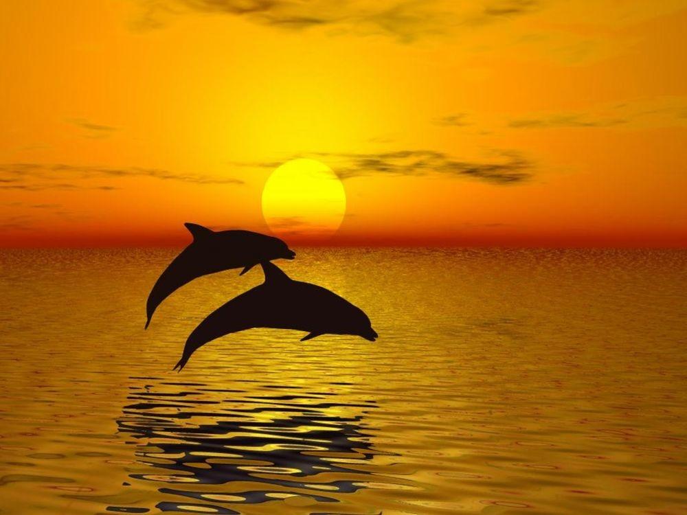 картинки дельфины море солнце посещаете