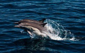 Дельфины в море картинки и обои (19)