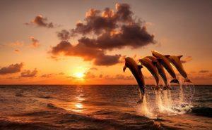 Дельфины на закате картинки и фото 021