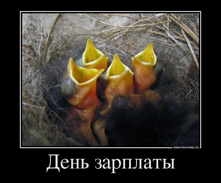 Демотиваторы про зарплату смешные и веселые019