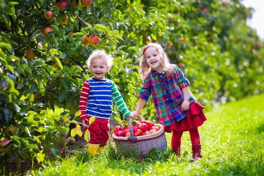 Картинка девочка в саду собирает яблоки