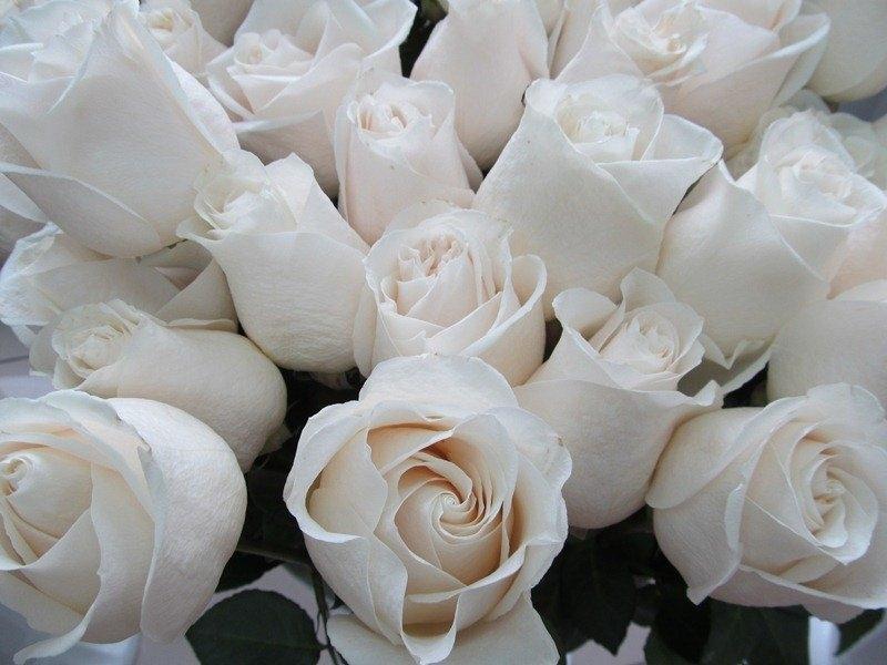 фото на тему шикарные белые розы как есть, его