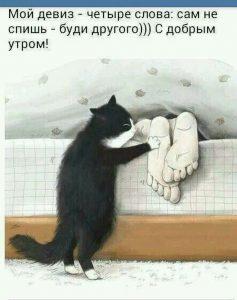 Доброе утро открытки с котами   подборка 026
