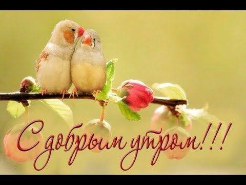 Доброе утро отличного настроения и прекрасного дня.   картинки 002
