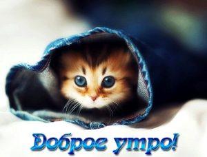 Доброе утро рыжий кот   картинки 019