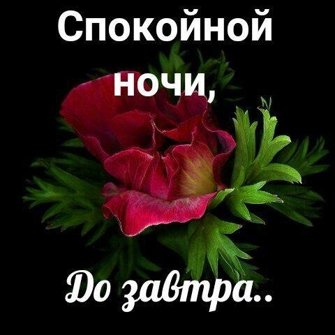 Доброй ночи картинки цветы   очень красивые002