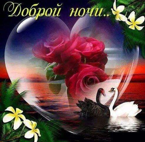 Доброй ночи картинки цветы   очень красивые006