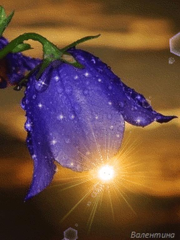 Доброй ночи картинки цветы   очень красивые021