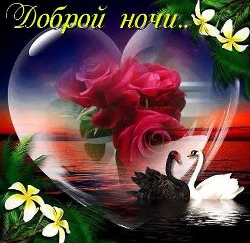 Доброй ночи цветы картинки и открытки003