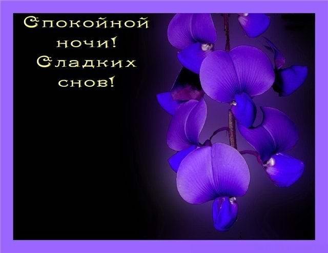 Доброй ночи цветы картинки и открытки008