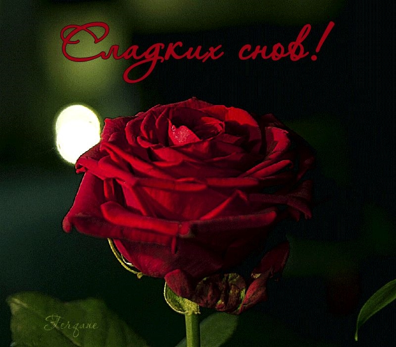 Доброй ночи цветы картинки и открытки010
