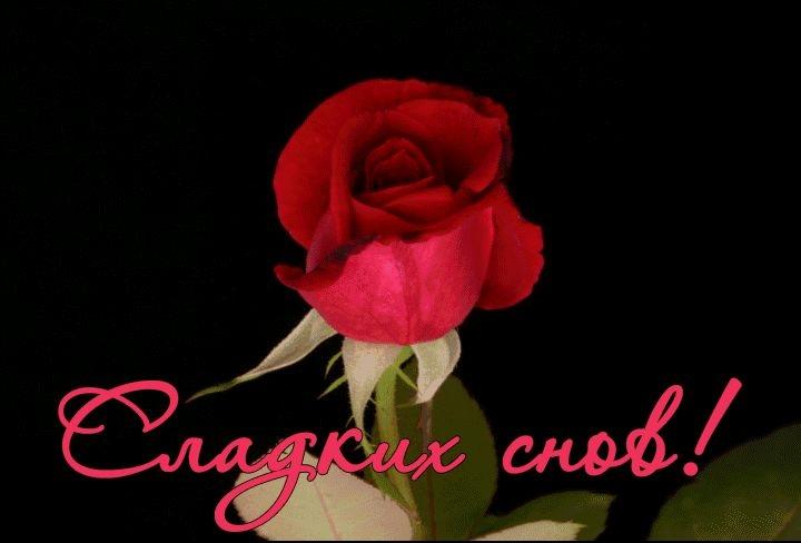 Доброй ночи цветы картинки и открытки016