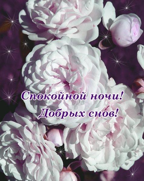 Доброй ночи цветы картинки и открытки019