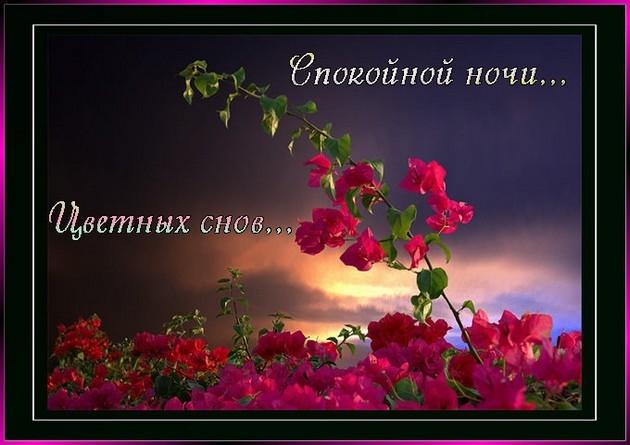 Доброй ночи цветы картинки и открытки023