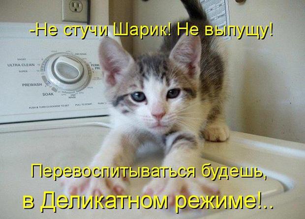 Домашние животные смешные фото004