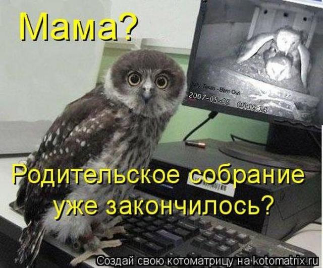 Домашние животные смешные фото007