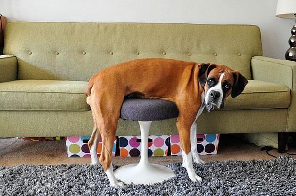 Домашние животные смешные фото011