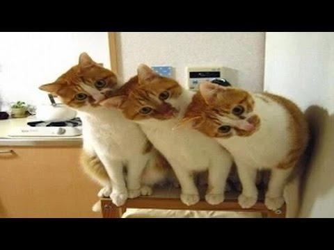 Домашние животные смешные фото012