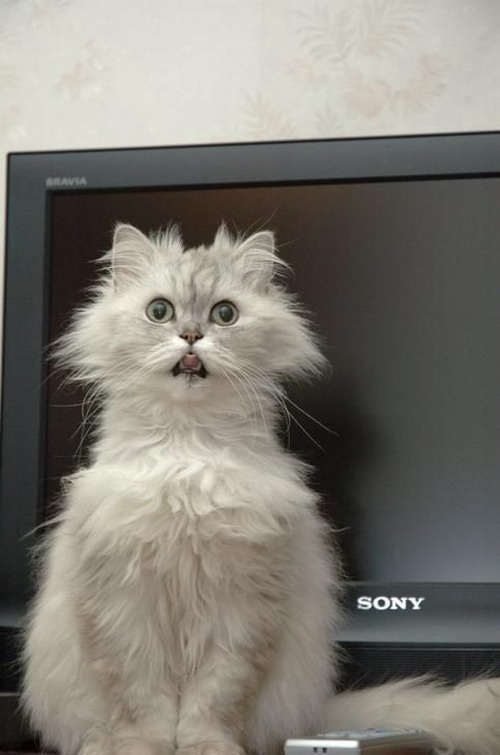Домашние животные смешные фото015
