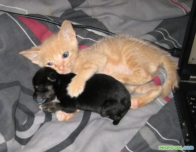 Домашние животные смешные фото016