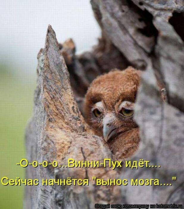 Домашние животные смешные фото024